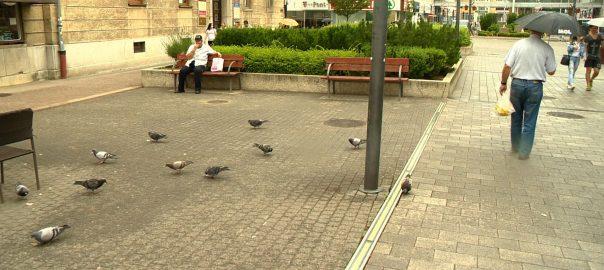 Harc a guanók ellen - tilos galambokat etetni NyíregyházánNyíregyháza - Azért sok a galamb a memgyeszékhelyen, mert a városlakók etetik őket, mondta a NYRVV szóvivője. Elszállítják őket a városból, de visszarepülnek, amíg ételt találnak a tereken.