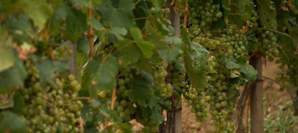 20160815 kevesebb borra szamitanak