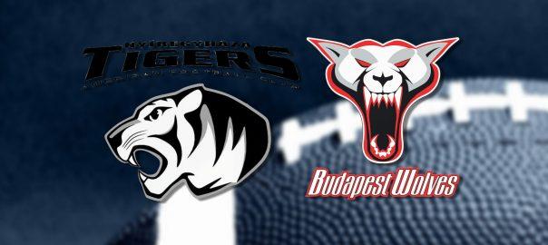 rangadot jatszanak a tigrisek