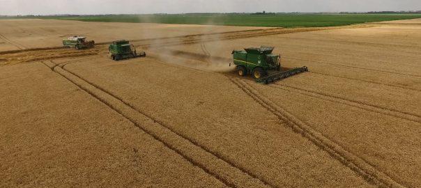 Idén két héttel korábban kezdődött az aratás, eddig már a megtermelt mennyiség 46 százalékát takarították be a gazdák.