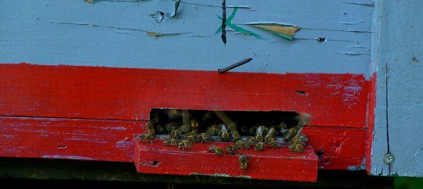 Még a szakemberek sem tudják, miért pusztult el a méhek egy része az elmúlt hetekben.