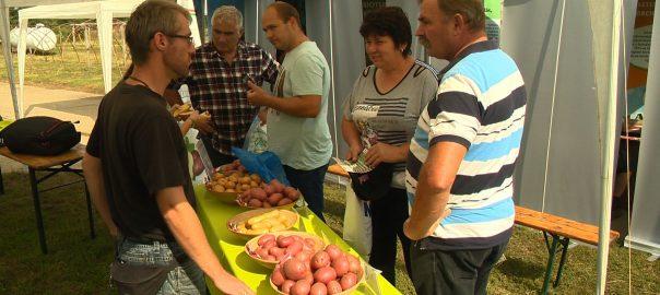 Huszonhatodik alkalommal, már nemzetközi szinten rendezték meg az idei burgonya fajtakísérleti bemutatót Gyulatanyán.