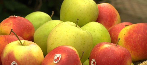 alma a termeszet oltalma