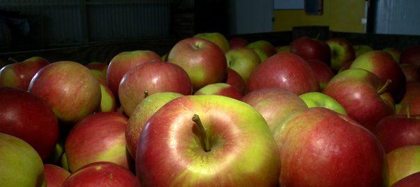 Kevesebb lesz az alma idén és drágább lesz a tavalyi árakhoz képest