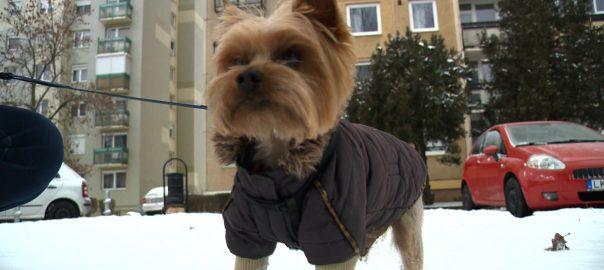 Kutya hideg