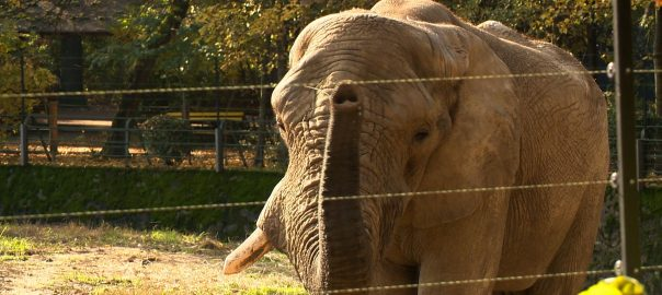 jack az elefant