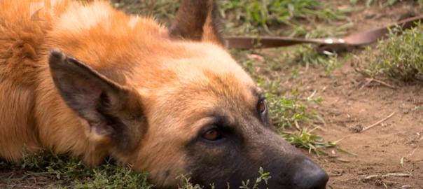 kutya szilveszter