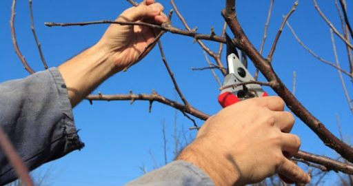 Idén is fontos a fagy elleni védekezés a gyümölcsösökben.