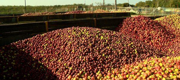 Határidő közeleg az almafelvásárlók részére