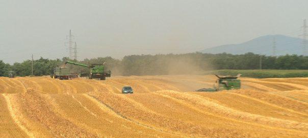 Aratás - Már dolgoznak a gépek Szabolcs-Szatmár-Bereg megye földjein