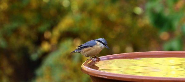 Nagy gondot kell fordítani a madarak itatásra a nyári hónapokban is