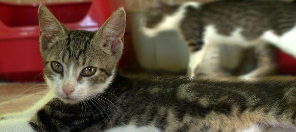 Milliós nagyságú a kóbor macskák száma Magyarországon